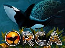 Orca бесплатно в Чемпионе